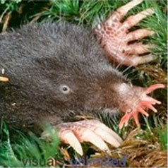 Get rid of moles with Creature Control