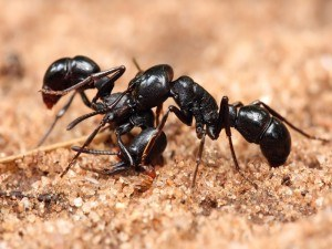 Get Rid of Ants with Creature Control
