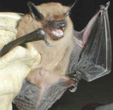 Bat Removal with Creature Control