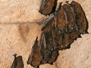 Get Rid of Bats with Creature Control