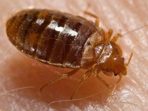 Bed Bug Removal with Creature Control