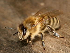 Bee Removal with Creature Control