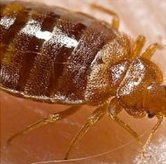 Get rid of Bed Bugs with Creature Control