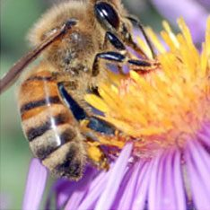 Get rid of Carpenter Bees & Honey Bees with Creature Control