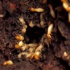 Get rid of termites with Creature Control