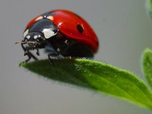 Japanese Beetle Removal with Creature Control