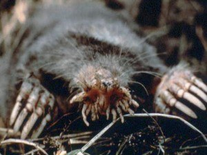 Get Rid of Moles in Yard with Creature Control