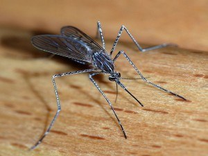 Mosquito Removal with Creature Control