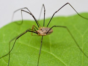 Get Rid of Spiders with Creature Control