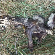 Get help with Removing Dead Animals and Animal Carcasses