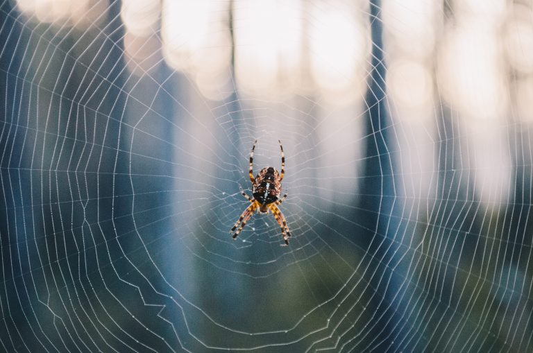 The Amazing Potential of Spider Silk